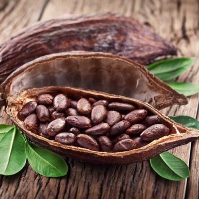 Cacao en parfumerie