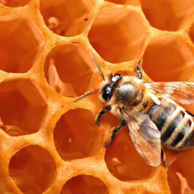 Miel en parfumerie