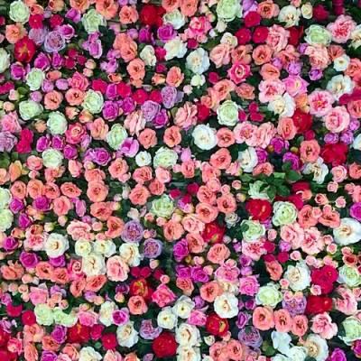 Notes fleuries en parfumerie
