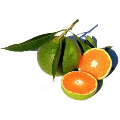 Orange Verte en parfumerie