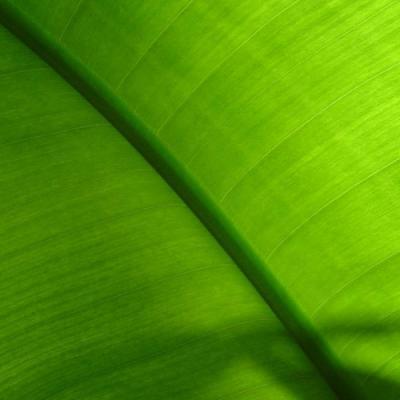 Parfum facette Verte