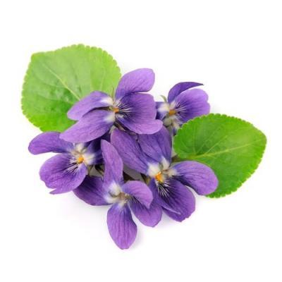 Violette en parfumerie